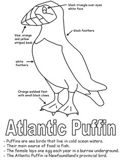 The Atlantic Puffin Bird Applique Templates, Applique Patterns, Embroidery Applique, Quilt Patterns, Canadian Quilts, Art Projects, Sewing Projects, Puffins Bird, Arctic Animals
