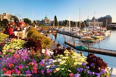 Victoria, British Columbia -- so beautiful! Butchart Gardens equally beautiful on Vancouver Island Victoria City, Victoria Canada, Victoria Harbour, Dream Vacations, Vacation Spots, The Places Youll Go, Places To See, Wonderful Places, Beautiful Places