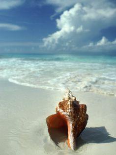 Seashell on Beach Lámina fotográfica