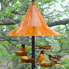 Oriole Feeders, Oriole Bird Feeders For Feeding and Attracting ...