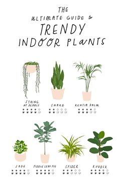 Your Planner Organized With These Free Printable Inserts Save this for a *FREE* printable planner guide for keeping trendy indoor plants alive.Save this for a *FREE* printable planner guide for keeping trendy indoor plants alive. House Plants Decor, Plant Decor, Garden Plants, Plants In Bedroom, Garden Shrubs, Dorm Plants, Best Bathroom Plants, Easy House Plants, Apartment Plants