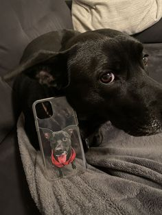Get YOUR pet hand-drawn & UV printed on a transparent OR colored Eco-friendly phone case now. Animal Phone Cases, Dog Phone, Dog Owners, Pet Portraits, Dog Life, Your Pet, Pup, Satchel, Friends