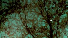 "visuals by Nathan M. Miller :: editorial magic by Matthew Brown music - ""Empty Room Trailer Version"" by Zack Hemsey zackhemsey.com  featured in The Atlantic  shot in Spring of 2010 while traveling throughout Japan. from the cityscapes of Tokyo to the 1,000 year old cedars on the southern island of Yakushima, it was quite the visual journey.  special thanks to Matthew Brown, Jon Gorham, & Christian Hansen  *original Vimeo posting here: http://vimeo.com/14032154 (if you &q…"