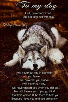Wonderful All About The Siberian Husky Ideas. Prodigious All About The Siberian Husky Ideas. Siberian Husky Funny, My Husky, Husky Puppy, Siberian Huskies, Husky Quotes, Dog Quotes, Husky Humor, Animal Quotes, Alaskan Husky