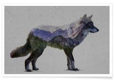 The Rocky Mountain Gray Wolf als Premium Poster von Davies Babies | JUNIQE