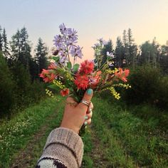 Image via We Heart It https://weheartit.com/entry/141932599 #flower #indie #nature