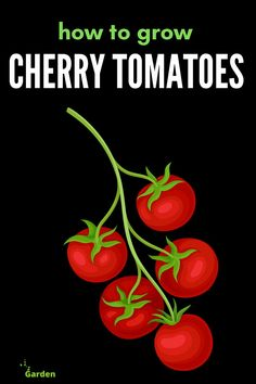HOW TO GROW CHERRY TOMATOES? Plant tomato plants in proper space, generally, 4 square feet of space should be left between two plants. If plants are too close then it will reduce airflow and encourage disease. Growing Cherry Tomatoes, Grow Tomatoes, Cherry Tomato Plant, Tomato Plants, How To Grow Cherries, Starting A Vegetable Garden, Tomato Garden, Square Feet, Space