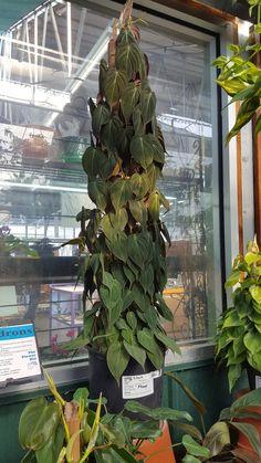 Garden Plants, Indoor Plants, Jewel Orchid, Plant Therapy, Vivarium, Totems, Fairy Houses, Houseplants, Planting Flowers