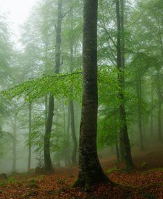 Parque natural del Saja Besaya  #Cantabria #Spain