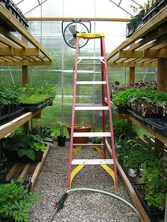 harbor freight tools greenhouse - Google Search