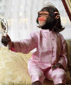 Not really sure what this says, but it's a funny monkey. Cute Funny Animals, Cute Baby Animals, Funny Cute, Hilarious, Images Emoji, Funny Images, Funny Photos, Monkey Art, Cute Monkey