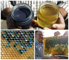 Blue Honey  Retweeted by Rick Riordan  Harlee Rose @Harlee_S  ·  May 26 @Camp Half-Blood Beekeepers in France have blue honey, because the bees ate blue M&M shells. Guess who I thought of?