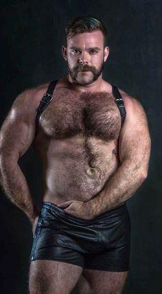 gay oso cuero