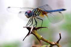 Beautiful dragonfly by Ira Nathenson, via Flickr
