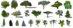 Descargar plantas, árboles 2D 3D SketchUp | Construye Hogar