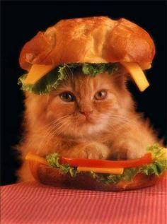 Kitty Cheezburger