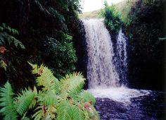 Hawaii waterfall, Hawaii painting gallery,Hawaii oil painting ...
