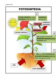 Fotosintesia