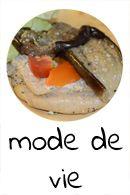 Mode de vie : en chemin vers le véganisme et l'écologie  - Clémentine la Mandarine'
