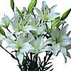 Alstroemeria - White - 90 Stems - Sam's Club $74