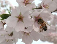 Create a Buzz in Your Garden: Bring in the Bees    Give pollinators a reason to come to your garden, and you'll enjoy bigger harvests.    By Marie Hofer, Gardening editor, HGTV.com [click photo]