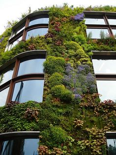 Green is good! A new way to make our world a better world...living walls on buildings. They provide insulation, keep interior cooler with less use of a/c, pollution control and above all a better view for the city life...