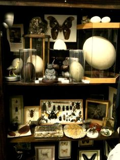 Mini museum, Cabinet of Curiosities