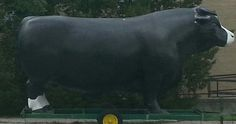 life size bovine on wheels. Photo taken by Claire Barrow in Indiana.