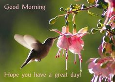 hummingbird+good+morning+images | Good Morning on image of hummingbird