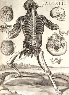 Tabulae anatomicae...    Rome, 1741. Copperplate engraving. National Library of Medicine.    Pietro Berrettini da Cortona  (1596-1669)  [artist]    Around 1618 Berrettini made a series of extraordinary drawings that were later forgotten and only printed in 1741. The figures are emphatic anatomical entertainers who solicit attention with aggressive body language.