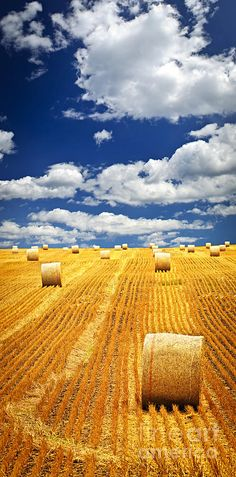 Farm field with straw bales in Saskatchewan