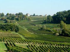 Le vignoble de Margaux