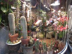 Kaktus og blomster