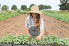 Blog | working hands farm