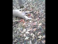 Deer Fakes Death And Scares Hunter Deer Hunting Videos, Deer Hunting Humor, Deer Camp, Hunting Quotes, Bow Hunting, Funny Hunting, Hunting Wedding, Camping Humor, Hunting Blinds