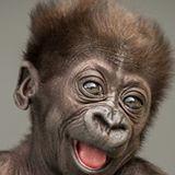 baby gorilla born at Pittsburgh zoo
