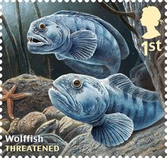 Royal Mail sustainable fish special stamps – in pictures