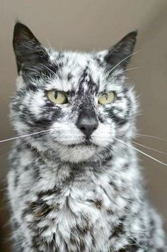 Magnificent - Cute Cats Drawings Easy :)