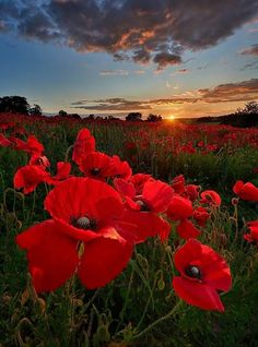 38 Ideas Photography Flowers Field Landscapes For 2019 Simple Flowers, Flowers Nature, Red Flowers, Beautiful Flowers, Plant Wallpaper, Red Poppies, Nature Pictures, Belle Photo, Pretty Pictures