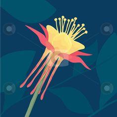 Columbine Flower stock vector