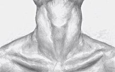 Learn to draw? You will need a pencil - Pencil Collar Bone Drawing . - Learn to draw? You& Need a Pencil – Pencil Collar Bone Drawing by HammersandThreads on Ets - Pencil Drawing Tutorials, Pencil Art Drawings, Art Drawings Sketches, Horse Drawings, Animal Drawings, Bone Drawing, Painting & Drawing, Anatomy Art, Anatomy Drawing