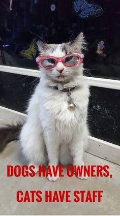 Mayhem   --   #kittymayhem #cutestcat  #cutestpicture #cutestkitty # cats #catquotes