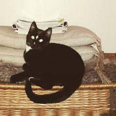 Onze boef Mous #kat #zwartwit #blackandwhite #cat #home #basket #brocante #koesfabriek #pillows #kussens #riverdale