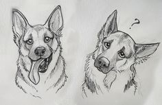 German shepherds :')