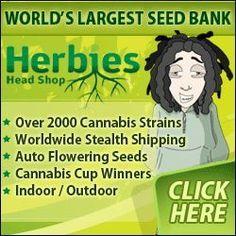 Buy Marijuana Seeds