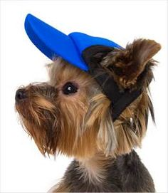 3fb30b1a4de 240 Best Dog Clothes images