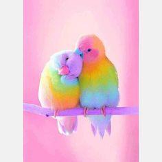 Diamant schilderij - Rainbow Parrot - Diamantmalerei - Diamond Painting Type: Full Diamond Painting met Full Drill Diamond Type: Square Diamond Wat is een - Baby Animals Super Cute, Cute Little Animals, Cute Funny Animals, Cute Dogs, Cute Babies, Cute Birds, Pretty Birds, Beautiful Birds, Animals Beautiful