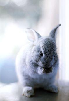 Bunnies (13)