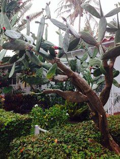 Cactus Miami fl