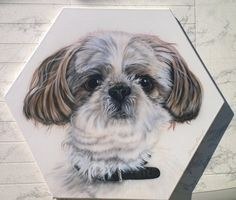 My dog Freehand Airb